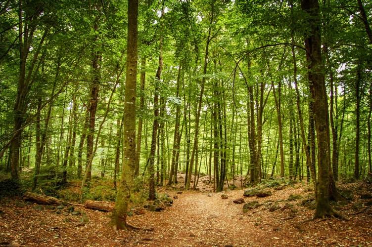 Vive la increíble experiencia de dormir en una casa árbol en mitad del  bosque | Chequealo